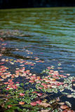 Il rosso va sulla superficie del lago immagine stock