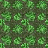 Il rosteniya tropicale lascia il verde di mistero su un fondo marrone con il contorno sottile nella parte posteriore bitmap illustrazione di stock