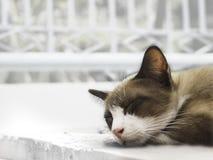 Il ` s bon pour prendre un petit somme le soir meow Le chat aiment dormir images stock