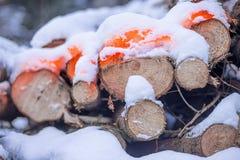 Il ` s del silvicoltore segnato registra con la tintura fluorescente arancio Immagine Stock Libera da Diritti