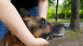 Il ` s delle donne passa a vite un vecchio cane video d archivio