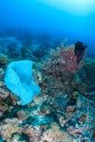 Il sacchetto di plastica inquina una barriera corallina fotografia stock