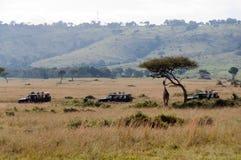 Il safari trasporta la giraffa su autocarro di osservazione fotografie stock