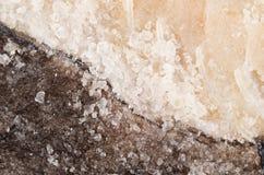 Il sale ha conservato il merluzzo Fotografia Stock
