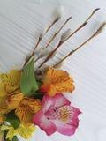 Il salice, fiori osserva la primavera di festa su un fondo di legno bianco rustico con alstroemeria Immagini Stock