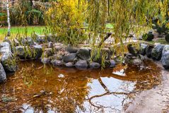 Il salice ha riflesso in un mini stagno in autunno immagine stock