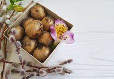 Il salice, primavera di alstroemeria del fiore della morbidezza della quaglia eggs Pasqua su una scatola di legno bianca Fotografia Stock Libera da Diritti