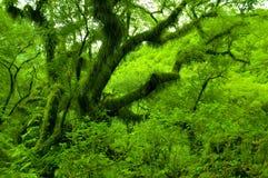 Il Salta verde Fotografia Stock Libera da Diritti