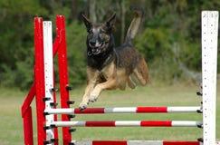 Il salto del cane Fotografia Stock Libera da Diritti