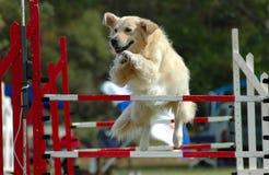 Il salto del cane Fotografia Stock