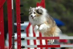 Il salto del cane Immagini Stock Libere da Diritti