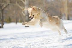 Il salto del cane Immagine Stock