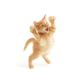 Il salto del gattino Fotografia Stock