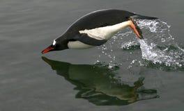 Il salto del pinguino Fotografia Stock