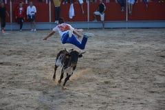 Il salto del toro Fotografia Stock Libera da Diritti