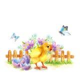 Il saluto felice di Pasqua cardChicken Fotografia Stock Libera da Diritti