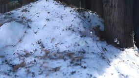 Il sapone della neve dell'albero di abete della foresta dell'inverno bolle nessuno metraggio del hd archivi video