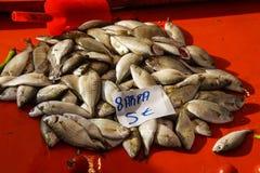 Il sarpa salpa può causare le allucinazioni Fotografia Stock