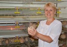 Il selezionatore femminile del pollame tiene a disposizione una quaglia (fuoco su un bir Fotografia Stock