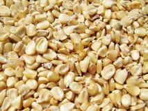 Il seme del cereale gradisce il tappeto fotografia stock libera da diritti