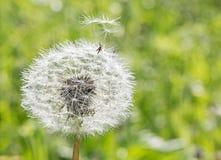 Il seme lascia il fiore Immagine Stock Libera da Diritti