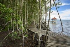 Il sentiero didattico della mangrovia Riscaldamento globale Fotografia Stock Libera da Diritti