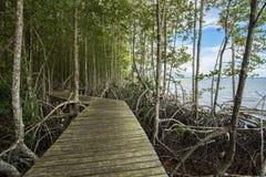 Il sentiero didattico della mangrovia Riscaldamento globale Immagini Stock Libere da Diritti