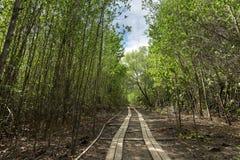 Il sentiero didattico della mangrovia Riscaldamento globale Fotografie Stock Libere da Diritti
