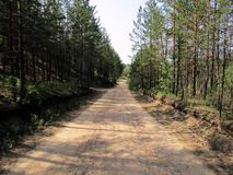 Il sentiero forestale va via nella distanza immagine stock