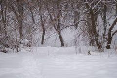Il sentiero nel bosco è calpestato nella neve Destinazione della neve landscape fotografie stock