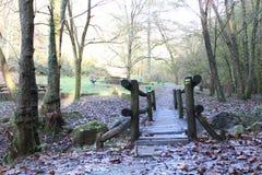 Il sentiero nel bosco di stagione di autunno con compie le foglie Fotografia Stock