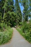 Il sentiero per pedoni della foresta che va lontano Immagini Stock Libere da Diritti