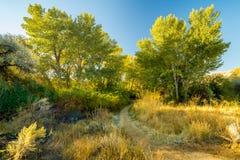 Il sentiero per pedoni della sporcizia conduce in una foresta di autunno degli alberi immagini stock