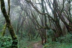 Il sentiero per pedoni in foresta nebbiosa Fotografia Stock