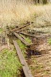 Il sentiero per pedoni fra le erbe alte sulla palude Immagini Stock