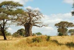 Il Serengeti Immagini Stock