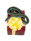 Il serpente adulto con suo andar in giroe della lingua è sul contenitore di regalo rosso con un arco giallo Immagini Stock Libere da Diritti