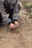 Il silvicoltore coltiva un albero Gli agricoltori stanno piantando gli alberi Fotografia Stock Libera da Diritti