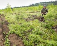 Il silvicoltore coltiva un albero Gli agricoltori stanno piantando gli alberi Fotografia Stock