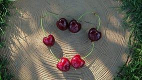 Il simbolo del cuore della bacca della ciliegia non sradica nessuno ombra dell'albero stock footage