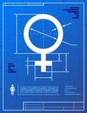 Il simbolo femminile gradice l'illustrazione della cianografia Fotografie Stock