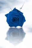 Il singolo azzurro è aumentato fotografie stock libere da diritti
