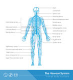 Il sistema nervoso Fotografia Stock Libera da Diritti