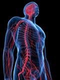 Il sistema nervoso umano illustrazione vettoriale