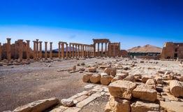 Il sito di Palmira Immagine Stock