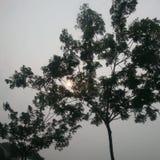 Il sole Fotografie Stock