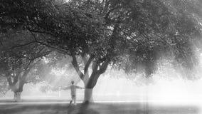 il sole attraverso la foresta Fotografia Stock