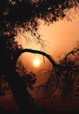 Il sole che cade per gli alberi. immagine stock