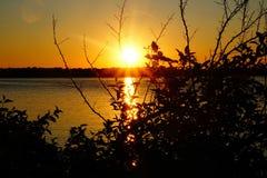 Il sole che dà una occhiata attraverso l'albero Fotografia Stock