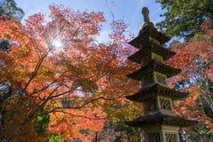 Il sole che splende attraverso l'albero di autunno sulla pagoda a Nikko, Giappone Immagine Stock